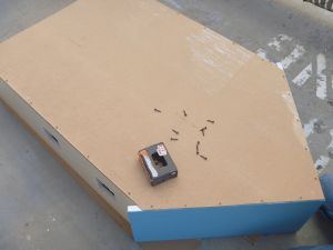 Attach Beadboard P1060171